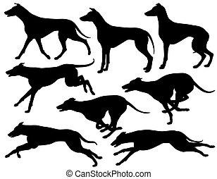 silhouetten, windhund, hund