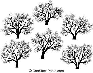 Silhouettes: Bäume ohne Blätter.