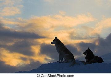 Silhouettes von zwei Wölfen (Hund)
