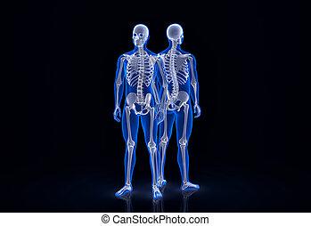 skeleton., ausschnitt, enthält, zurück, menschliche , front, pfad, ansicht.