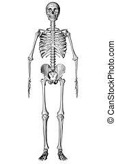 Skeleton - Sketch