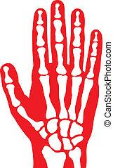 skelett, menschliche hand