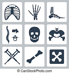 skelett, vektor, satz, freigestellt, heiligenbilder