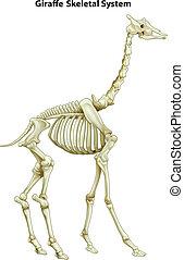skelettartig, giraffe, system