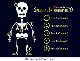 skelettartig, infographic, design, wohnung