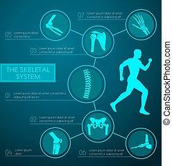 skelettartig, medizin, infographic, system, menschliche