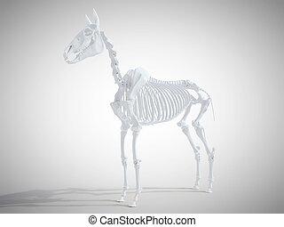 skelettartig, pferd, system