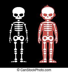 Skelette menschliche Knochen. Kartoonstil. Vector