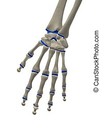Skeletthand