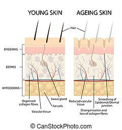 skin., junger, älter