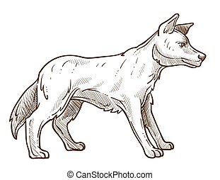 skizze, dingo, tier, freigestellt, australische, rasse, hund, wild