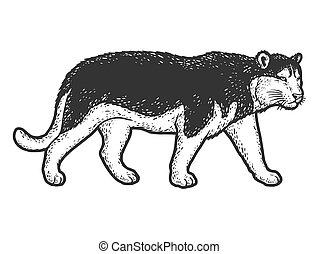 skizze, kratzer, mantel, hund, heiser, brett, imitation., mögen, tiger, breed., farbe