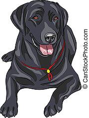 skizze, labrador, rasse, hund, re, vektor