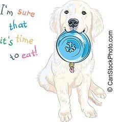 skizze, labrador, sitzen, rasse, hund, vektor, whte, junger hund, apportierhund