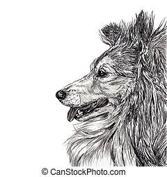 skizze, sibirisch, hund