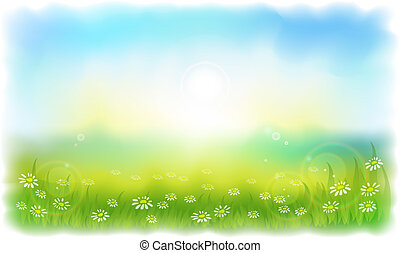 sommer, wiese, daisies., sun-drenched, sonnig, outdoors., tag