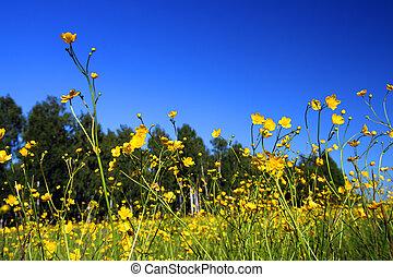 Sommerwiese mit Blumen