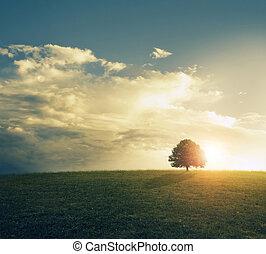 Sonne im Grasfeld.