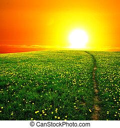 Sonnenaufgang auf dem Löwenzahnfeld