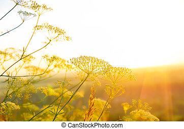 Sonnenaufgang im Sommer