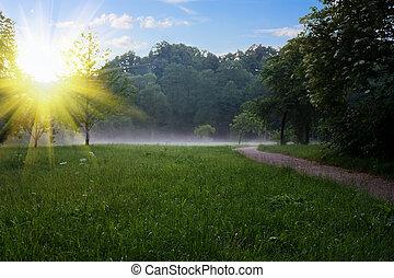 Sonnenaufgang im Sommerpark