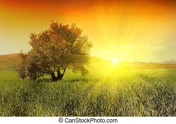 Sonnenaufgang und Olivenbaum