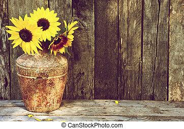 Sonnenblume bleibt Leben.