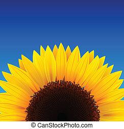 Sonnenblumen Hintergrund