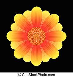 Sonnenblumenblüte abbrechen