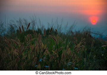 Sonnenuntergänge.