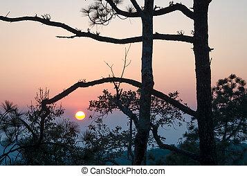 Sonnenuntergang im Wald.