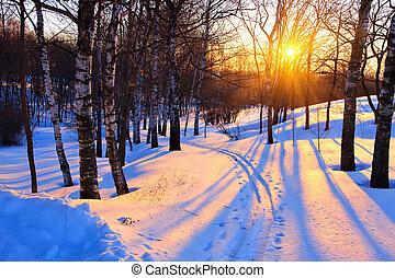 Sonnenuntergang in einem Winterpark