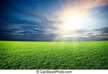 Sonnenuntergangssonne und Grüngrasfeld unter blauem Himmel