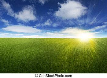 Sonniger Himmel über dem Grasfeld