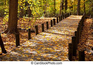Spaziergänge und Ahornblätter