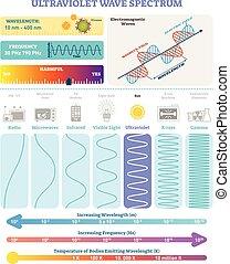 spectrum., frequenz, welle, ultraviolett, vektor, waves:, structure., wellenlänge, elektromagnetisch, abbildung, diagramm, schädlichkeit