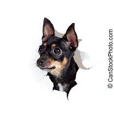 Spielzeug-Terrier-Hund in Papier-Seite, zerrissenes Loch isoliert