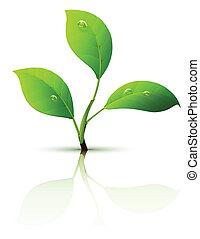 Sprümel mit grünen Blättern