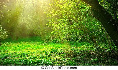 Spring Park mit grünem Gras und Bäumen. Wunderschöne Naturlandschaft
