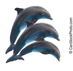 Springende Delfine auf weiß.
