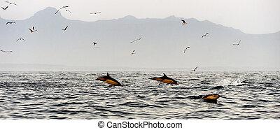 Springende Delfine.