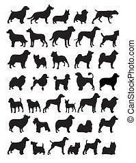 Stammhunde züchten