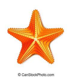 Starfisch isoliert auf weißem Vektor.