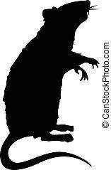stehende , ratte, silhouette