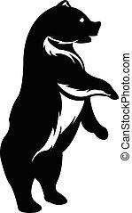 stehende , silhouette, bär