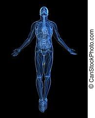 steigend, röntgenaufnahme, -, koerper