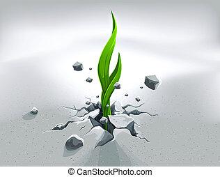 stein, pflanzenkeim, anschieben, durch, starke , heraus, boden