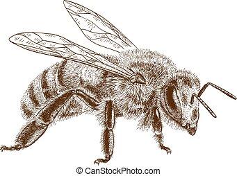 stich, biene, honig, abbildung