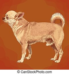 stich, chihuahua, hund, abbildung