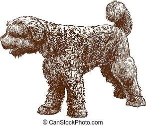 stich, portugiesischer wasser-hund, abbildung